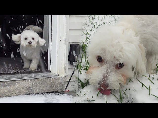 Puppy's First Snow Day! *Cutest Reaction*