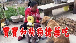 金毛狗狗生病,媽媽花了一千給狗狗買的藥,寶寶看到了竟從狗狗嘴裡搶! 【我是趙姐】