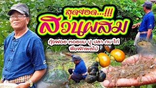 สุดยอด ไร่นาสวนผสม กุ้งฝอย หอยขม ปู ปลา กบ ไก่ พืชผักผลไม้ มีรายได้ตลอดปี