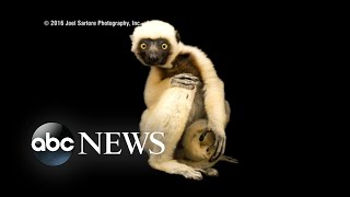 Wildlife photographer traveled the world to snap stunning animal portraits