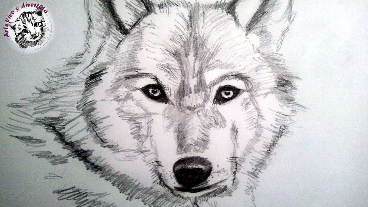 Como Dibujar Un Lobo A Lapiz Paso A Paso Como Dibujar Animales Con