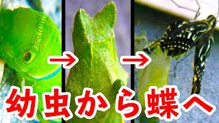 BBQ Japan TV Top 10(上位10) ①PRANK REAL SPIDERS / РЕАЛЬНЫЕ ПАУКИ ...
