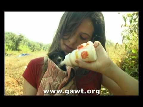Goa Animal Welfare Trust (GAWT)