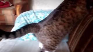 Моя кошка Люся,хоть и старая ,но чувствует себя как дитя!!!!😆😍😘