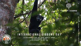 Celebrating Malaysia's Small Apes