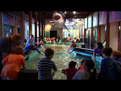 Touch A Shark! at the Maritime Aquarium at Norwalk