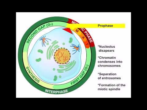 7  Cell reproduction