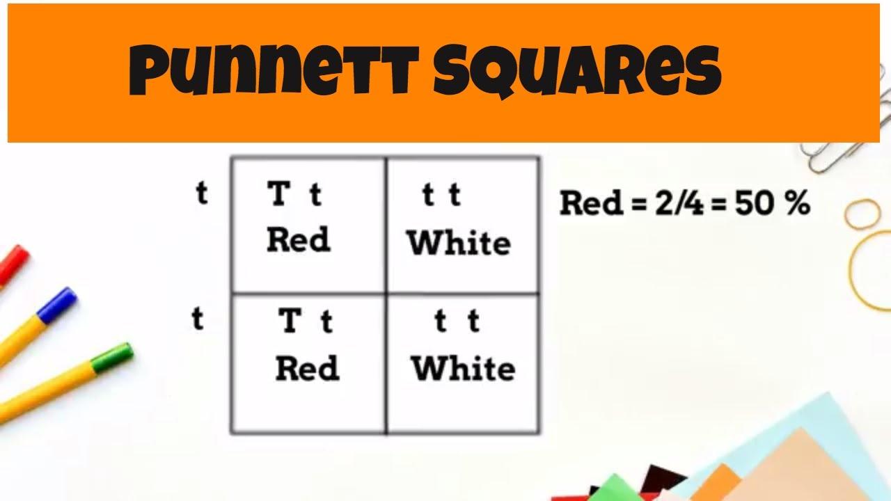 Punnett Square Basics Monohybrid Cross Youtube Diagram