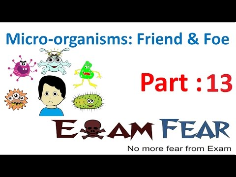Biology Micro Organisms Part 13 (Nitrogen fixation & Cycle) Class 8  VIII