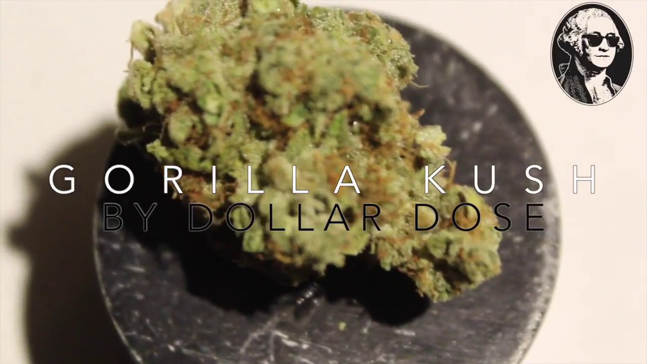 Gorilla Kush   Dollar Dose Signature Strain
