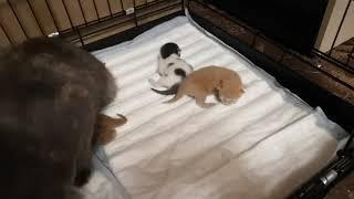 Кошка Ариэль не давно попавшая к нам со своими котятами