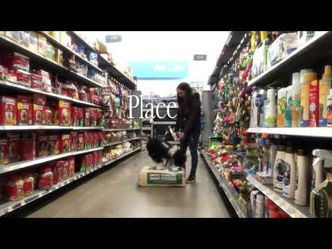 Portuguese Water Dog - Dog Training - Dog Day Out