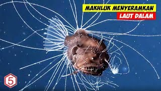 Makhluk Yang Lebih Mengerikan dari Megalodon Yang Hidup di Palung Mariana