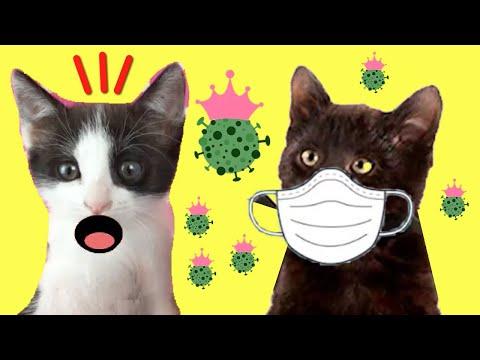 Mis gatos graciosos Luna y Estrella ¿están enfermos? / Funny cats