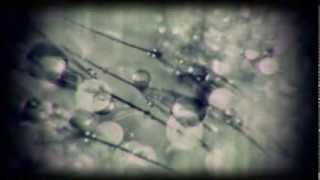 Edit Select - Phlox LP (Prologue) / Video By amoeba