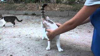 Chișinău, orașul pisicilor alintate