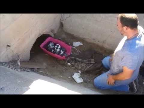 Destiny - Female Stray Gave birth to 7 little puppies in a culvert.