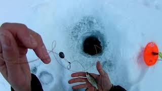 Рыбалка на реке Шарык Ловля щуки на жерлицы Активный клёв щуки