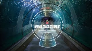 Explore the Oregon Coast Aquarium in 360° Video