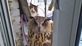 Owl Yoll & cat Murloc-a subtle relationship. Owl or Cat -who's the troll? Who turned off the camera?