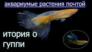 История Гуппи, аквариумные растения почтой