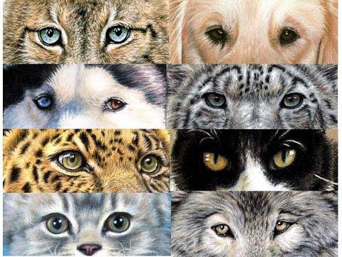 """""""Animal Eyes – Tierblicke"""" Tutorial Malen und Zeichnen mit Nicole Zeug"""