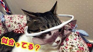 【毎日18:00更新】 チャンネル登録もお願いします。 https://www.youtube.com/subscription_center?add_user=komugitodaizu ※猫好きさんには面白くないかも!