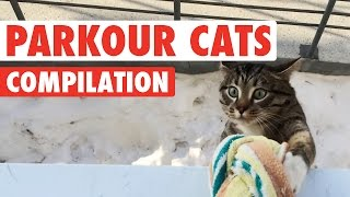 Funny Parkour Cats Video Compilation 2016