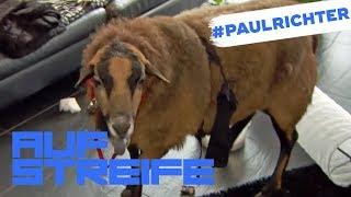 Schaf in der Wohnung: Was ist das für ein Prank? | #PaulRichterTag | Auf Streife | SAT.1 TV