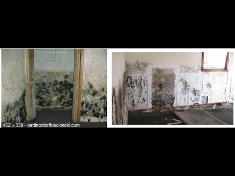 How To Get Rid Of Black Mold On Walls how to get rid of black mold on walls review - youtube
