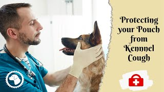 Bordetella Vaccine For Dogs: Protecting Your Pooch From Kennel | DOG HEALTH 🐶 Brooklyn's Corner