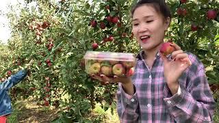 Tập 64 🇰🇷Tham Quan Vườn Táo MiNi Ở Hàn Quốc Cùng Các Cô Dâu Nước Ngoài -사과 미니 따기
