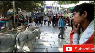 पावागढ टेम्पल सम्पुर्ण दर्शन यात्रा का आनंद ले : शानदार अनुभव : आदगार पल // Pavagadh Temple