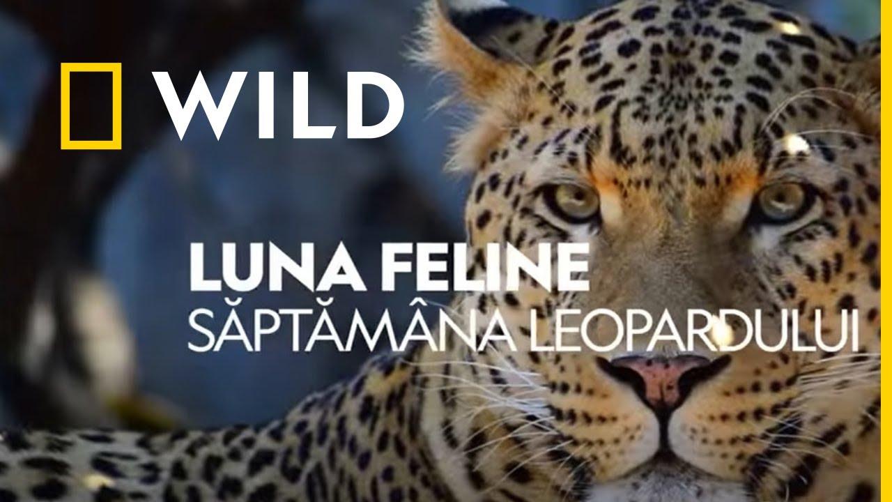 pierderea în greutate leopard