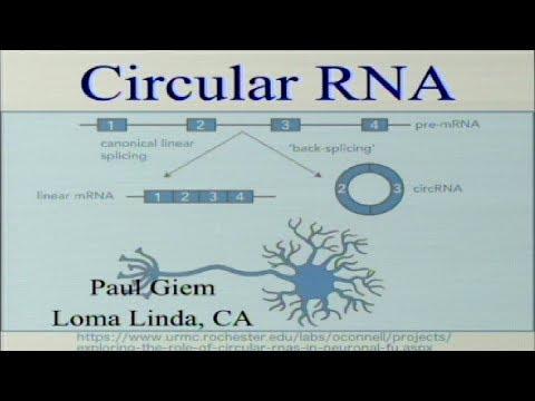 Circular RNA 9-2-2017 by Paul Giem