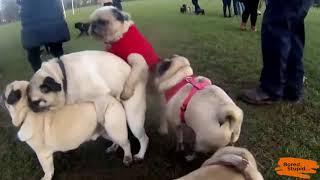 Dogs Doing The Conga