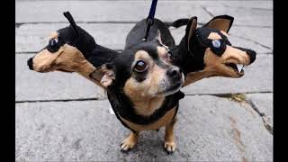 Dogs in Halloween costumes. So funny.. Which one is the winner?