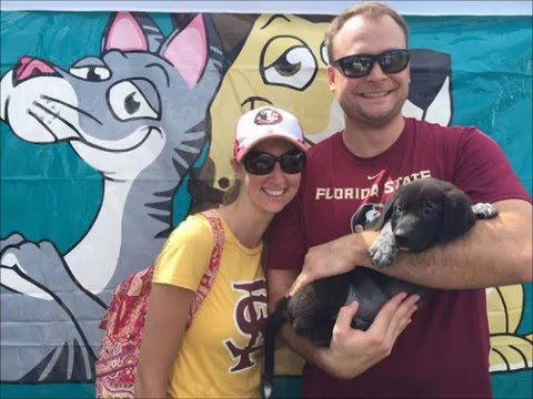 2015 A SECOND CHANCE PUPPIES AND KITTENS RESCUE, ADOPTIONS  LOVE  HAPPINESS