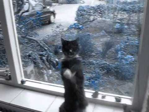 Cats doing gangnam style