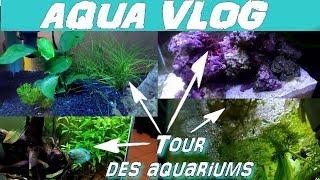 Tour de mes aquariums d'eau douce et marin [AQUA VLOG]