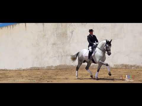 Exhibición a caballo Centro Ecuestre Vega del Pinar