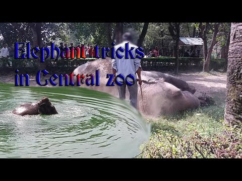 ELEPHANT TRAINING || SWIMMING IN WATER || CENTRAL ZOO