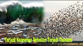 Download lagu VIRAL Ada keanehan sebelum terjadi tsunami palu Tp diabaikan II HD MP3
