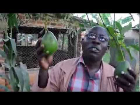 Dosaroma Community Agricultural Demonstration Farm