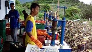 Economy pineapple peeling machine by abc ====www.abc.co.th====