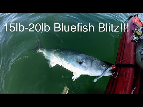 MONSTROUS Jersey Shore Bluefish - Near Record Kayak Blues!