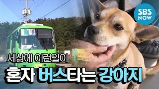 SBS [순간포착 세상에 이런일이] - 혼자 버스타는 강아지 /