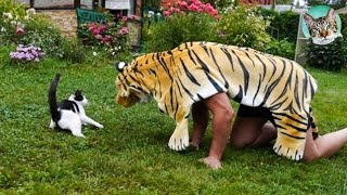 Pets Getting Scared Over Nothing Funny Cat And Dog Videos| Amazing Animals