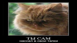 Очень смешные коты! Подборка демотиваторов. Смешно до слез!