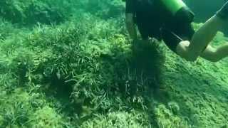 Experience scuba diving, Mallorca
